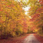 کاش همه انسان ها مثل پاییز باشن