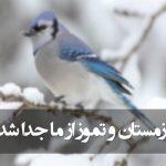 زمستان و تموز از ما جدا شد (مولانا)