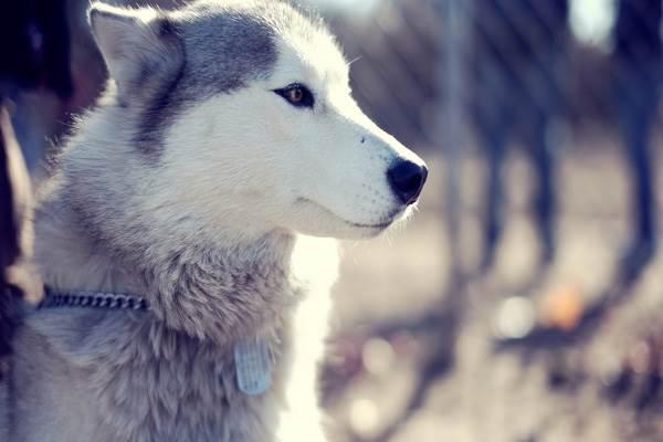 زوزه ی گرگ از تنهاییست